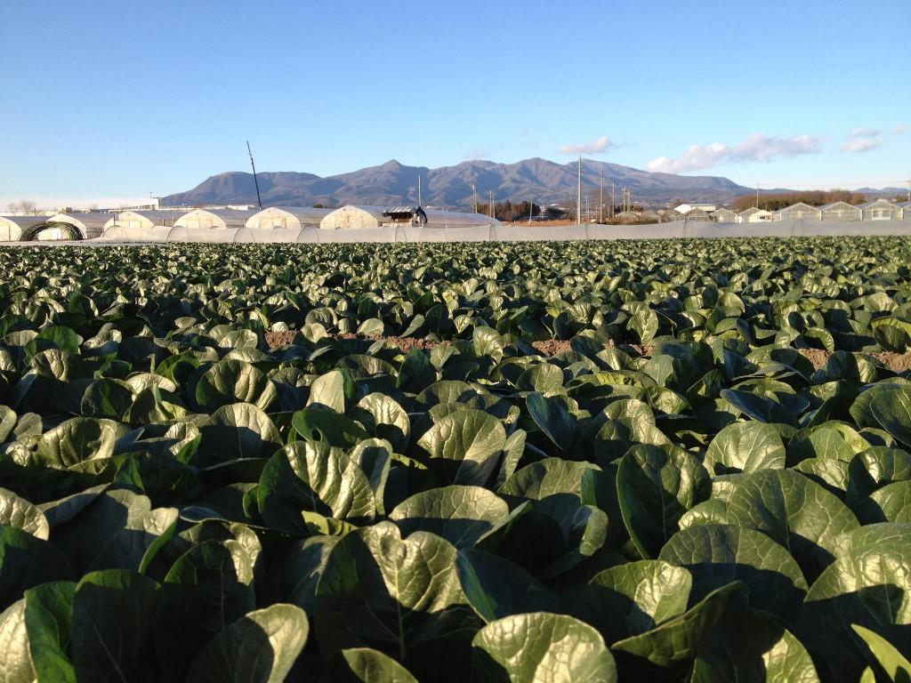 akagi-farm